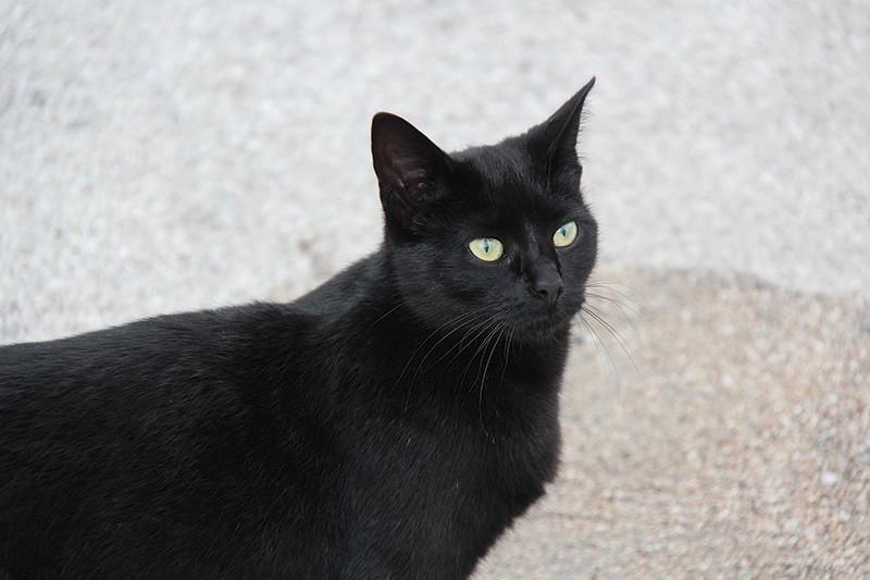 In una situazione difficile, con la Miao, gatta tutta nera, che nasconde qualche pelo bianco sul suo manto. Ancora una volta la Canon 1200D riesce ad offrire un'ottima prestazione, soprattutto nel dettaglio.